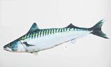 Polštář Makrela - The Makrela 50cm