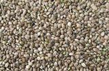 Konopné semínko kyblík 1,2kg