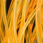 Body Glass Half Round 91 - signální oranžová