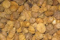 Ořechy, kukuřice, partikl